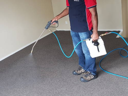 Carpet Cleaning Auckland Professional Steam Cleaners West