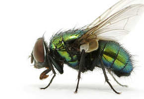 Carpet-Cleaners-Pest-control-auckland-1