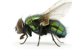 Pest-control-auckland.jpg